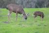 Lopez Lake Animals 20161112-553