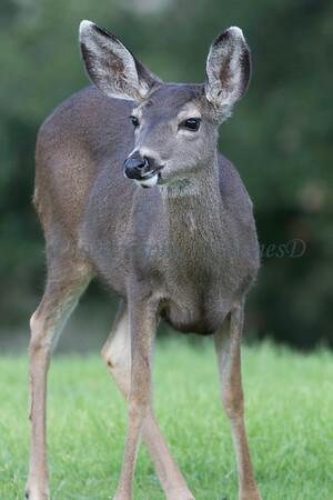 Lopez Lake Animals 20161112-890