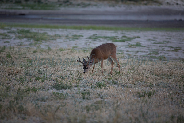 Lopez_Lake_Wildlife_20150628-218