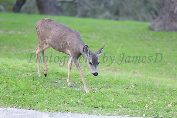 Lopez Lake Animals 20161112-731