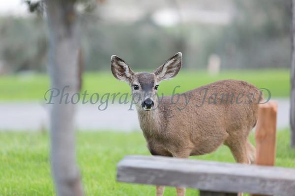 Lopez Lake Animals 20161112-472