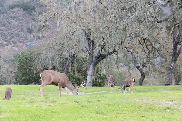 Lopez Lake Animals 20161112-578