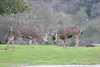 Lopez Lake Animals 20161112-496
