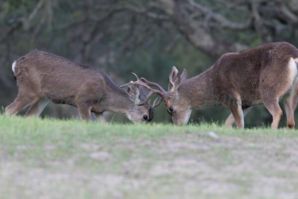 Lopez Lake Animals 20161112-1030