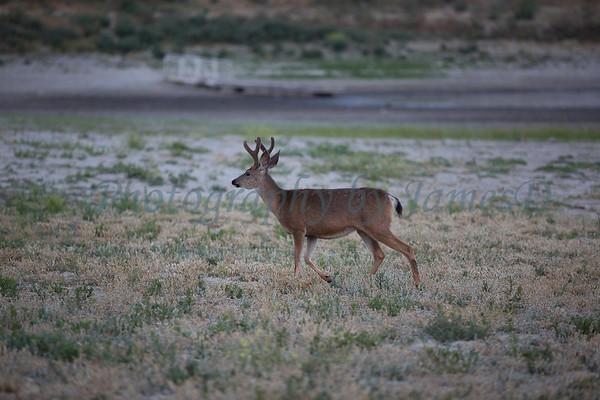 Lopez_Lake_Wildlife_20150628-235