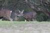Lopez Lake Animals 20161112-1017