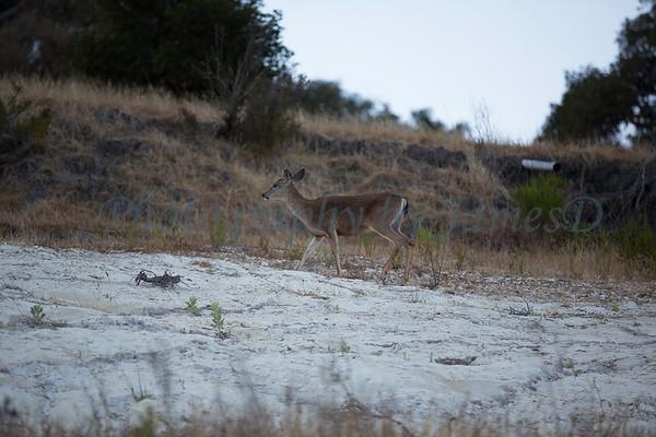 Lopez_Lake_Wildlife_20150628-162
