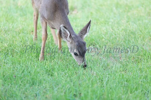 Lopez Lake Animals 20161112-772