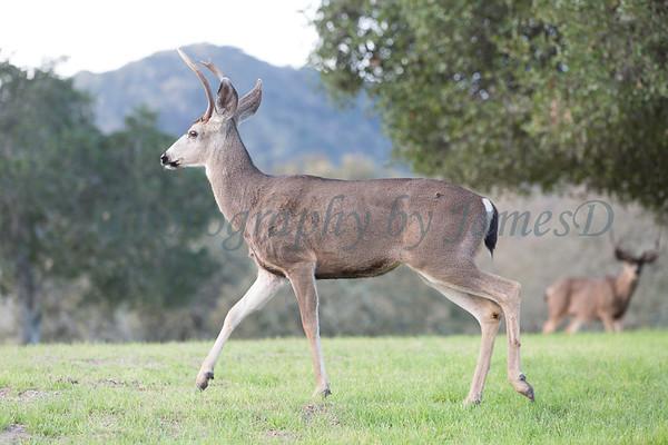 Lopez Lake Animals 20161112-1066