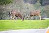 Lopez Lake Animals 20161112-509