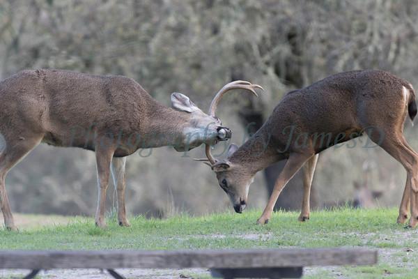 Lopez Lake Animals 20161112-926