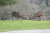 Lopez Lake Animals 20161112-520