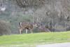 Lopez Lake Animals 20161112-544