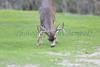 Lopez Lake Animals 20161112-705