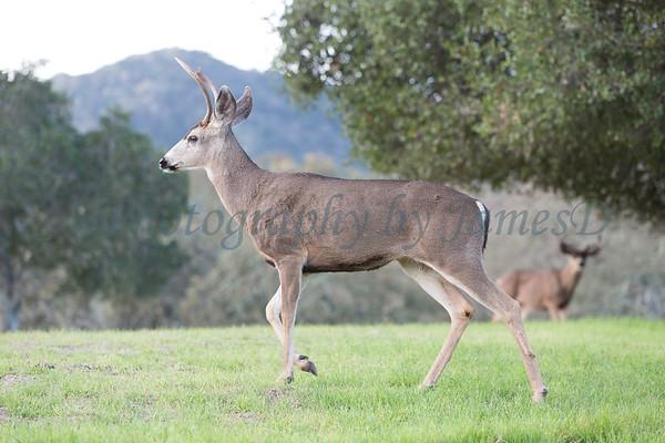 Lopez Lake Animals 20161112-1065