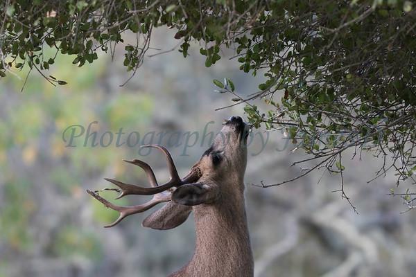 Lopez Lake Animals 20161112-1055