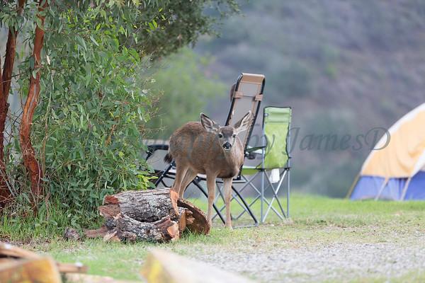 Lopez Lake Animals 20161112-424