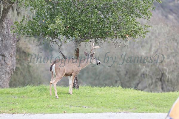 Lopez Lake Animals 20161112-458
