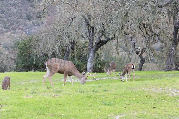 Lopez Lake Animals 20161112-579