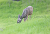 Lopez Lake Animals 20161112-985