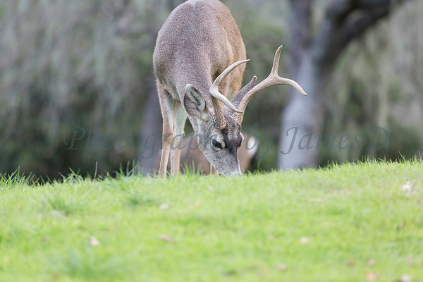 Lopez Lake Animals 20161112-641