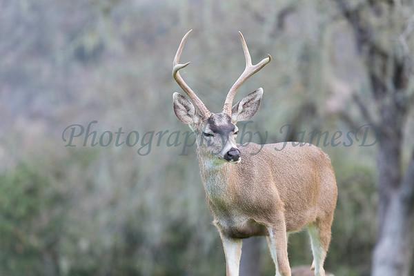 Lopez Lake Animals 20161112-652