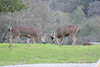 Lopez Lake Animals 20161112-497