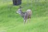 Lopez Lake Animals 20161112-991