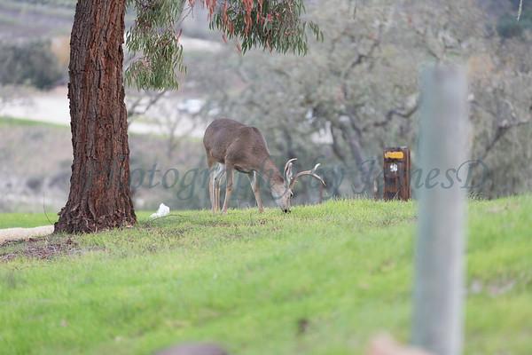 Lopez Lake Animals 20161112-431