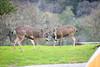 Lopez Lake Animals 20161112-508