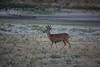 Lopez_Lake_Wildlife_20150628-234