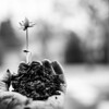 20130316-DirtHandFlower_bw-4209