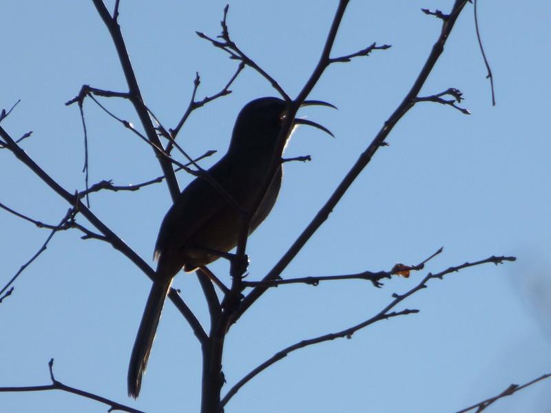 12/31 california thrasher