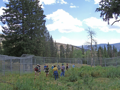 Listening to Nathan Varley and Carter Niemeyer share their first-hand experiences what it was like to view the Rose Creek pack through these fences before they were released to the wild.