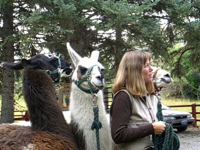 "Therese Woodruff (owner Lander Llamas)  with ""humming"" llamas"