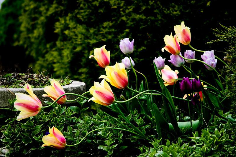 Flowers040505-004