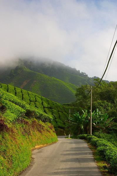 通往茶园待客处的唯一道路,大约两公里。我就站在路边拍摄清晨的茶园景色,右手边是东方,逆光的遍地茶树,晨光在山坡起伏间留恋。