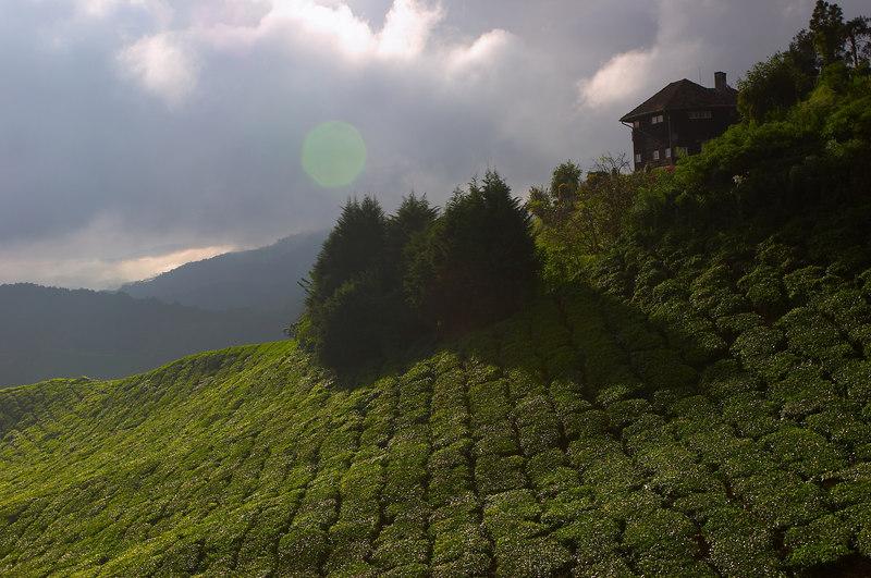 我总想象着这间依山而建的屋子是一个隐士。每个阳光的清晨看着树的影子读一回经书。