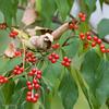 Berries-2736