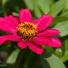 Flower 5-2143