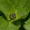 Flower bud 1-2150