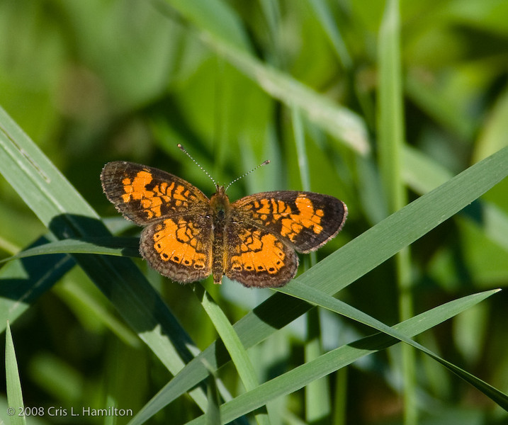 ButterflyTylstwn-3176