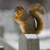 Squirrel-2341