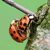 LadyBugs-7348