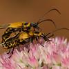 Bugs-9937
