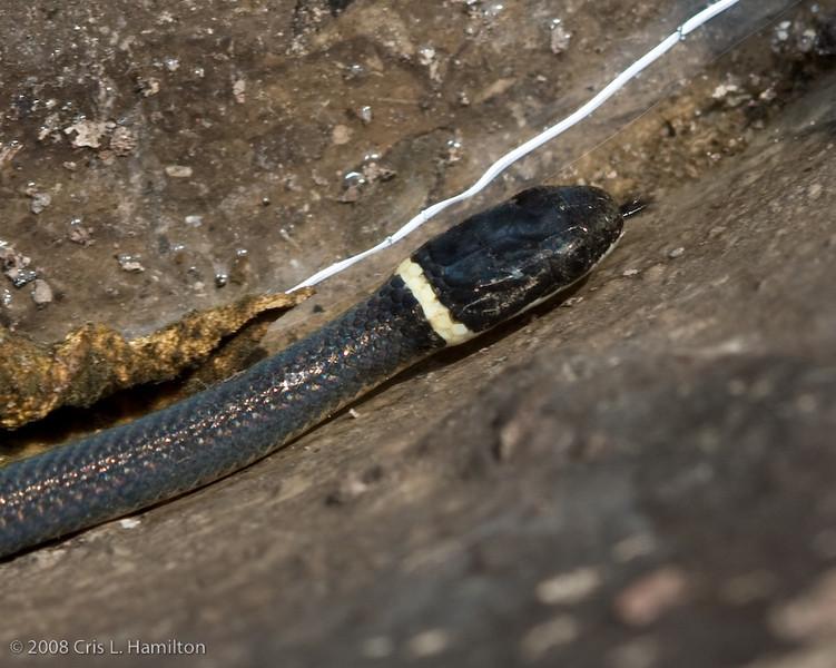 Snake-4920