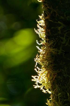 Moss under the Sunlight