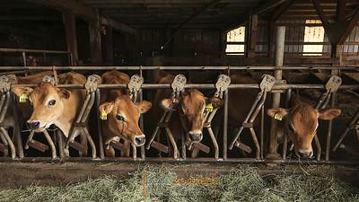 MaG-0824-Dairy-Twinbrook