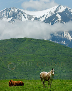 © Paul Conrad/Pablo Conrad Photography  With a cloud enshrouded Mt. Sopris in the background, two horses take in a lazy day at the Someday Ranch in Missouri Heights near Carbondale, Colo.