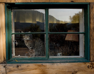 © Paul Conrad/Pablo Conrad Photography  A cat sits in the window of its home in Emma, Colo., outside Basalt.